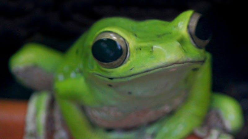 Helt grønn