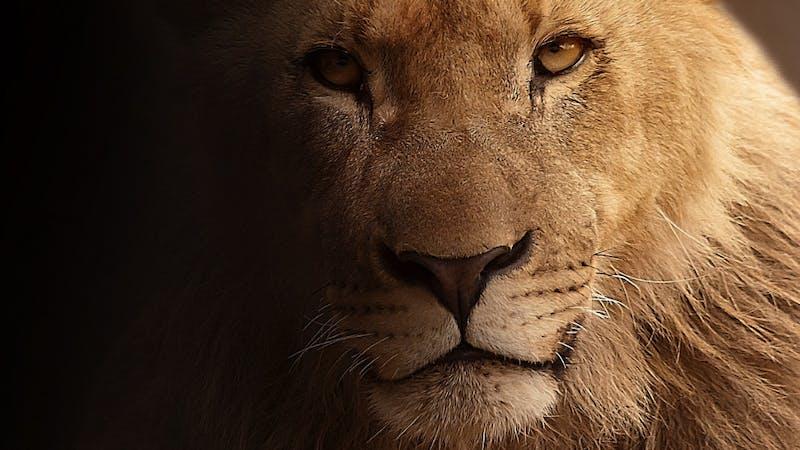 Hvorfor ble ikke Daniel spist av løvene?
