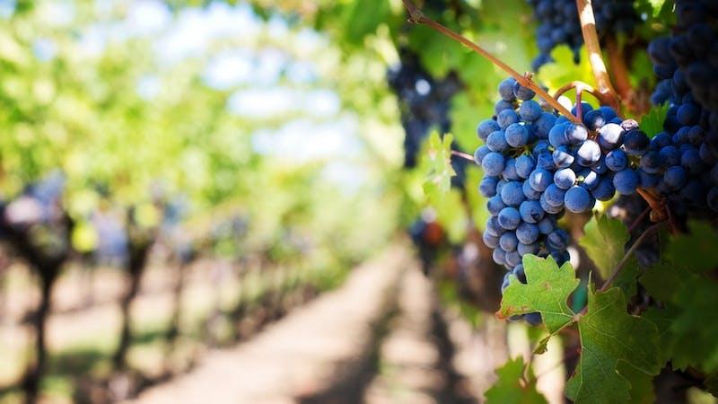Lignelsen om arbeiderne i vingården